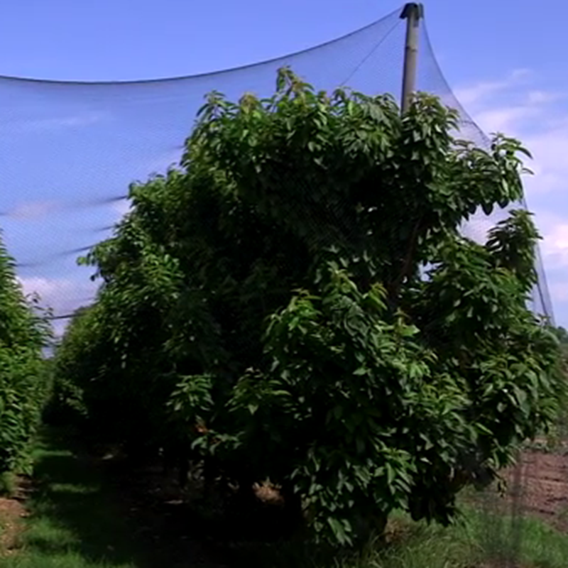 Agricultural HDPE+UV treated anti-bird netting for farmland