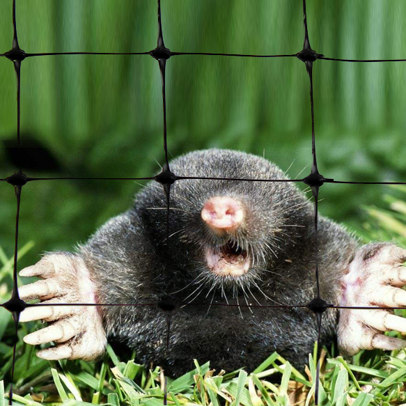 Economy Polypropylene extruded anti moles netting/Black Plastic Against Mole Netting/Anti Deer Net/Anti Bird Net